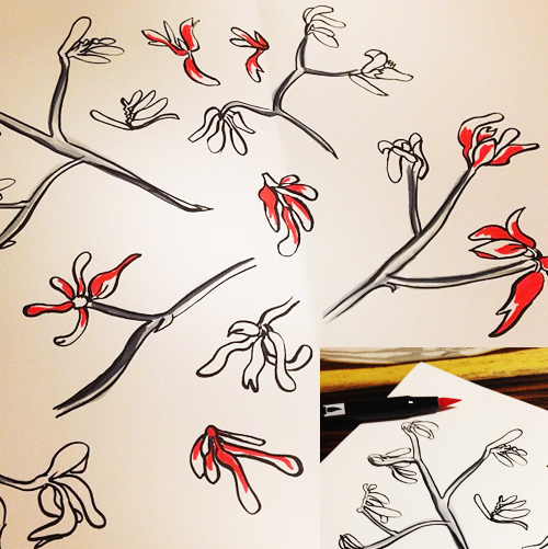 2kangaroopaws_drawing2